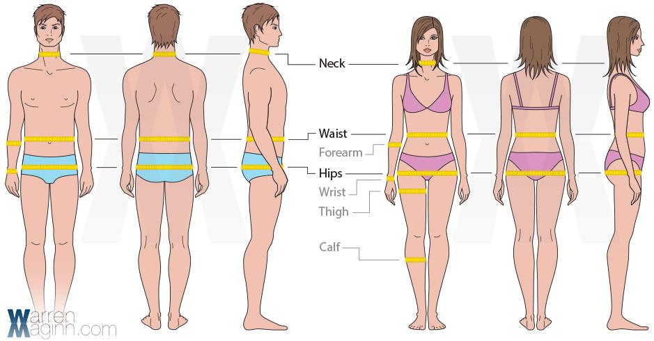 Body Tape Measurements Male & Female