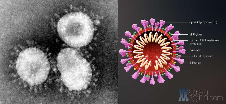 Coranavirus Shape